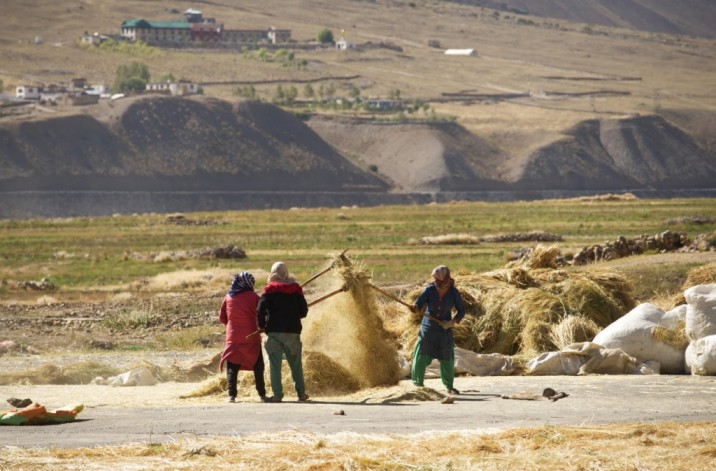 Three women separate grain from the chaff in the cold desert mountain of Spiti Valley, Himachal Pradesh, India